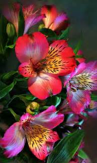 beautiful flowers image 24 most beautiful flowers in this gallery mostbeautifulthings