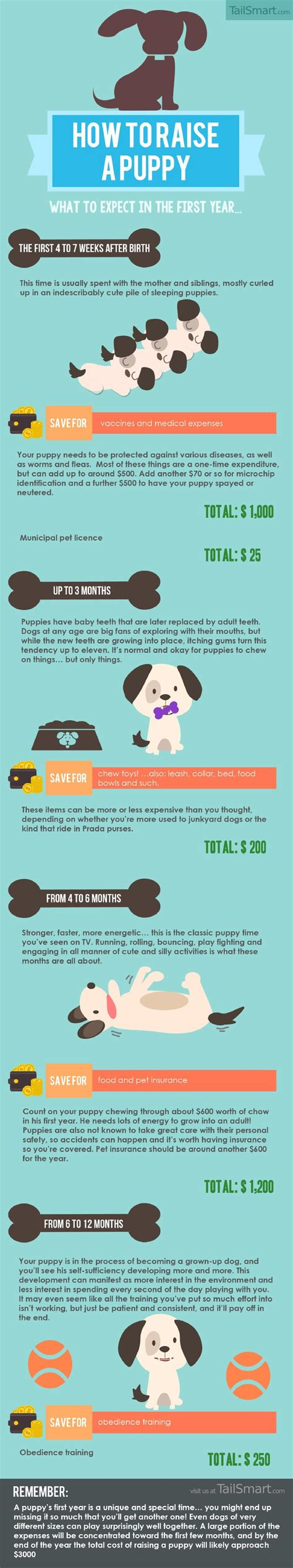 puppy bathroom schedule how to raise a puppy what to expect in the first year
