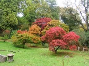 ahorn garten file bryngarw country park japanese garden autmn maple