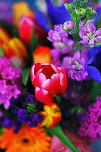 bright colored flowers bright beautiful colorful flowers flowers