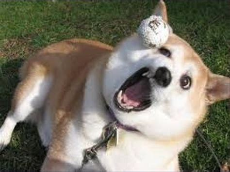 dogs who fail at being dogs hd dogs who fail at being dogs p12