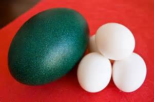 Backyard Chicken Care Emu Egg Quiche Food Republik