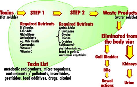 Detox Soluble Toxins by Toxins And Gain What You Need To