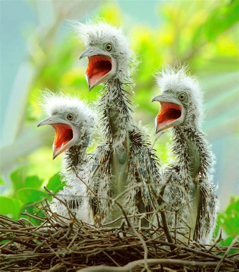 just cool pics adorable exles of baby birds photography