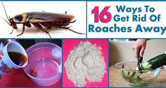 how to get rid of roaches permanently my health tips