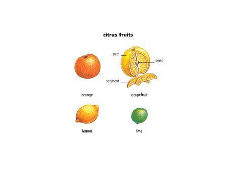 fruit definition fruit 1 noun definition pictures pronunciation and