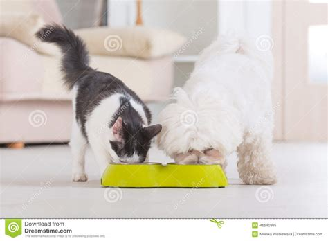 cute dog eating from bowl stock photo image 61440749 dog and cat eating food from a bowl stock image image of