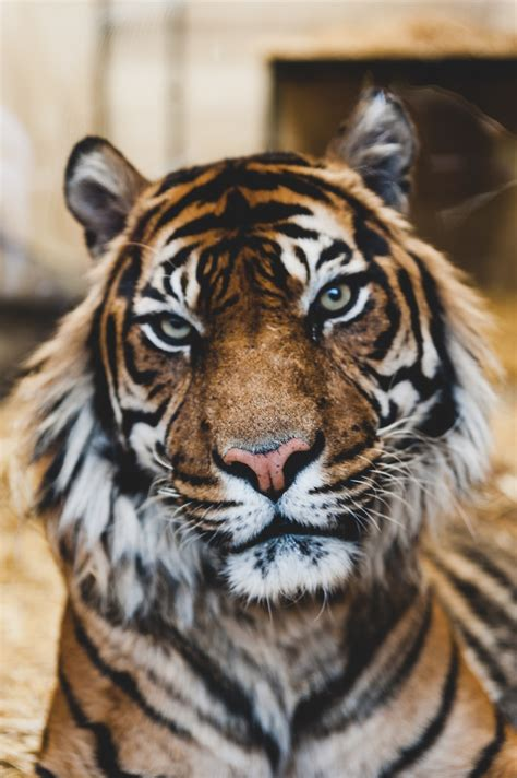animal pictures hd   images stock