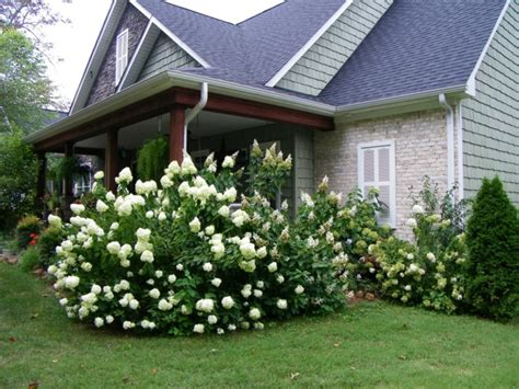 Garten Gestalten Hortensien by Mit Hortensien Akzente Im Garten Setzen
