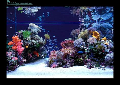 Marine Aquascaping Techniques by Best 25 Saltwater Tank Ideas On Coral Fish Tank Coral Aquarium And Marine Tank