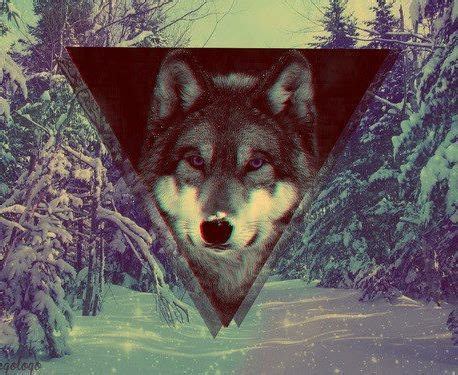 wallpaper tumblr wolf hipster backgrounds on tumblr