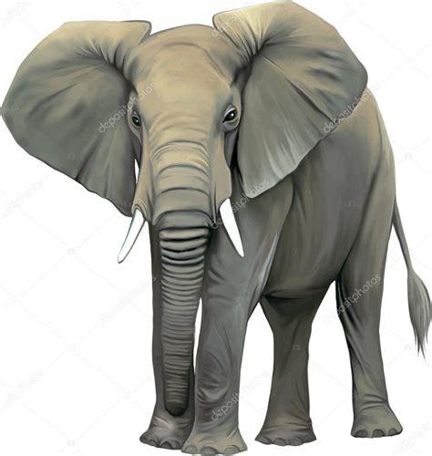 Big adult Asian elephant — Stock Vector © YuliaAvgust ...