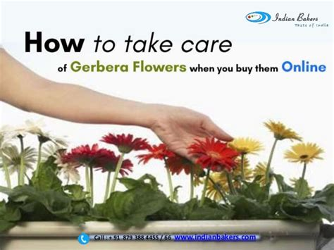 how to get hold of an indian home decor pickndecor com how to take care of gerbera flowers when you buy them online