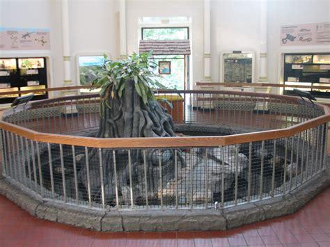 reptile house reptile house alligator exhibit 187 cincinnati zoo and