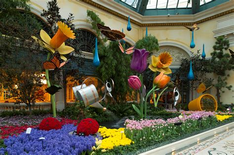 showers bring bountiful flowers at bellagio s