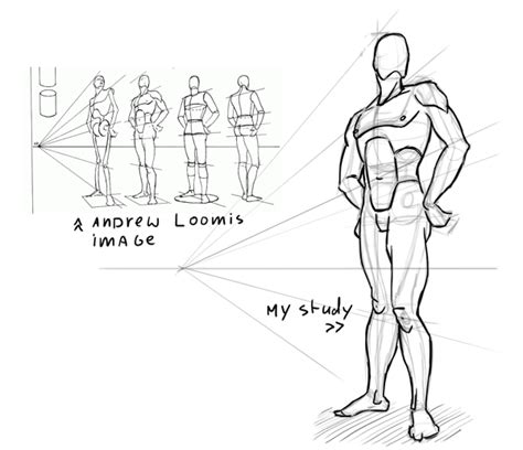 Drawing Human Anatomy by Learning Drawing Principles Andrew Loomis Steps In
