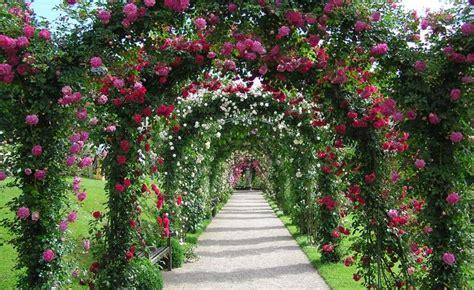 garten rosenbogen 220 ber 1 000 ideen zu rosenbogen auf