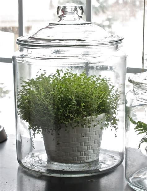 kitchen window terrarium 136 best decorate images on pinterest home spaces and diy