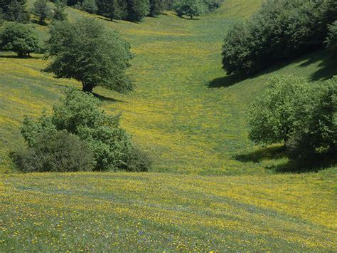 foto di prati fioriti parco monte subasio galleria fotografica prati fioriti