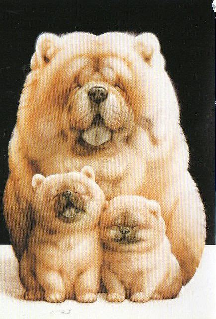 what age can dogs puppies 25 best ideas about chow chow dogs on chow chow puppies chow chow and
