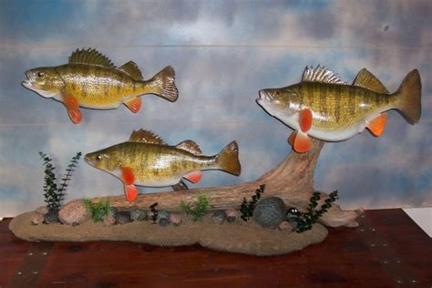 Yellow Accent Wall Display Options For Anglers Art Custom Fish Taxidermy In