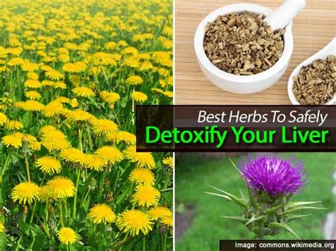 How To Detox Your Naturally And Safely by Best Herbs To Safely Detoxify Your Liver