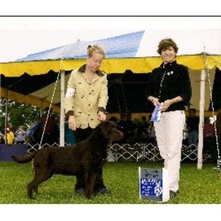 lab puppies nj ark labradors labrador retriever breeder in jackson new jersey