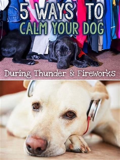 how to comfort a dog during thunderstorms 17 best images about anxiety in pets on pinterest signs