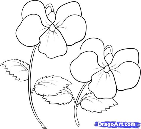 purple violet flower coloring page violet coloring pages how to draw violets step 6 a