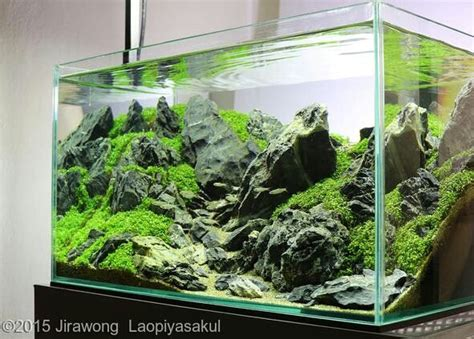 Award Winning Aquascapes by 8 Best Award Winning Nuvo Aquariums Images On