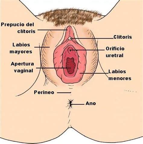 libro el perine femenino y clases fundamentos de enfermeria aseo de genitales femeninos aseo vulvar