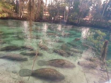 Manatee County Florida Property Records Florida Manatee Count Breaks Record Patch