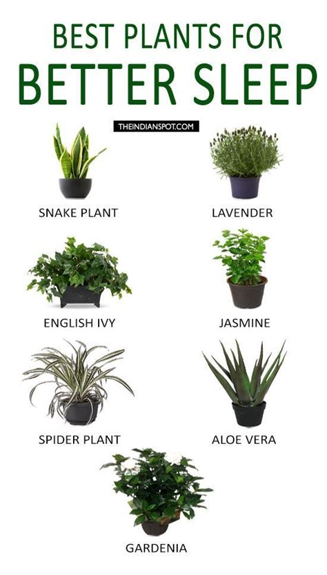 best plants for bedrooms best plants to keep in your bedroom to help you sleep