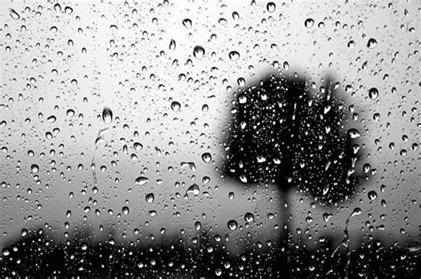 themes in black rook in rainy weather poetry drop black rook in rainy weather by sylvia plath