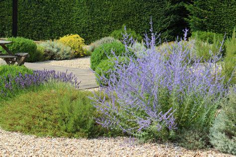 Pflanzen Für Kiesgärten pflanzen f 252 r den kiesgarten 187 eine auswahl der sch 246 nsten