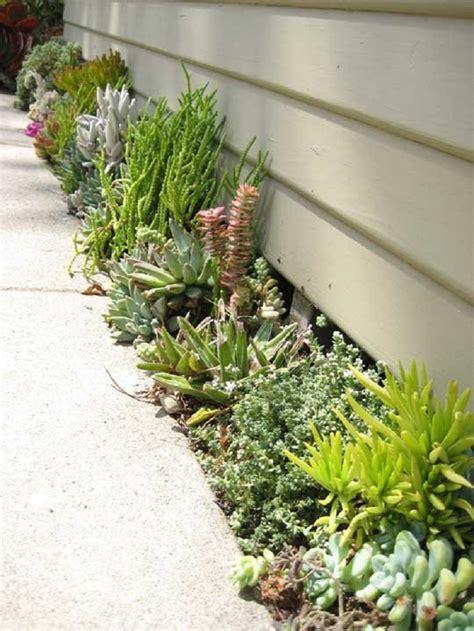 top  diy outdoor succulent garden ideas top inspired