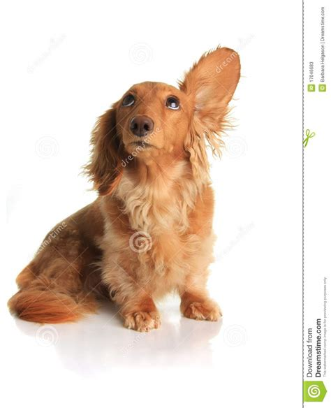 noises dogs sound stock image image of hearing alert concept 17046683