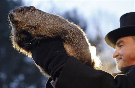 groundhog day last day no shadow pennsylvania groundhog predicts early