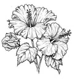 drawing of hibiscus google search riscos e pinturas