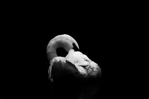 imagenes educativas blanco y negro 7 razones para tomar fotos en blanco y negro club