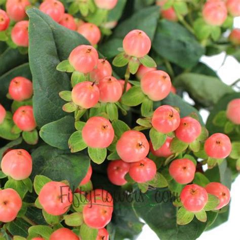 Syari Berly Pink 2in1 pink hypericum berries search wedding ideas