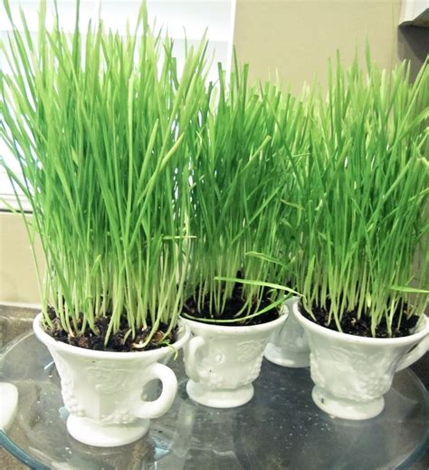 17 best images about easter grass kit ideas on pinterest