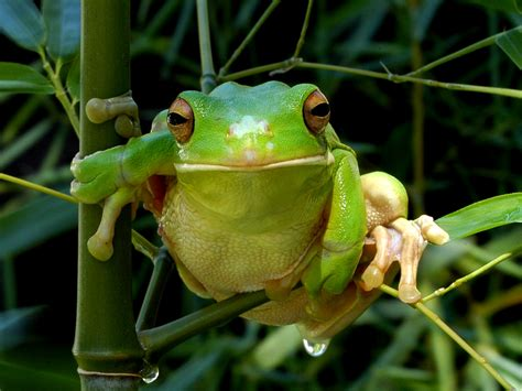 wallpaper apple frog frog wallpaper for computer wallpapersafari