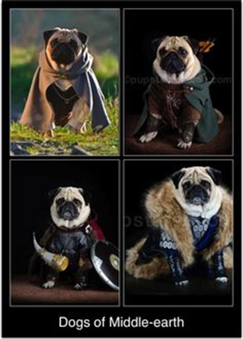 pugs of middle earth the hobbit and the lord of the rings on pugs thorin oakenshield and the