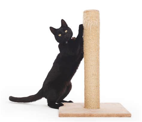 Sisir Buat Kucing sebelum pelihara kucing kamu harus punya 6 aksesoris penting ini artikel tips dan kisah seru