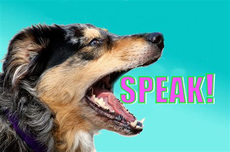how to teach to speak easy trick how to teach your to speak or bark when you ask