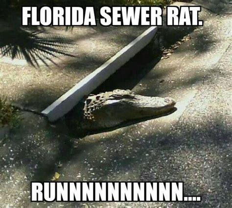 Florida Meme - related keywords suggestions for sewer jokes