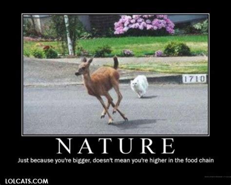 Nature Meme - nature cat meme cat planet cat planet