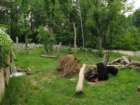 Asiatic black bear enclosure @ Zoo Zlin-Lesna » Zlín Zoo ...