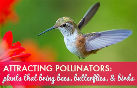 how to attracting pollinators flowers that encourage